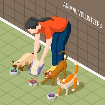 Koty wolontariat izometryczny