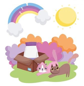 Koty z jedzeniem w pudełku trawa słońce zwierzęta