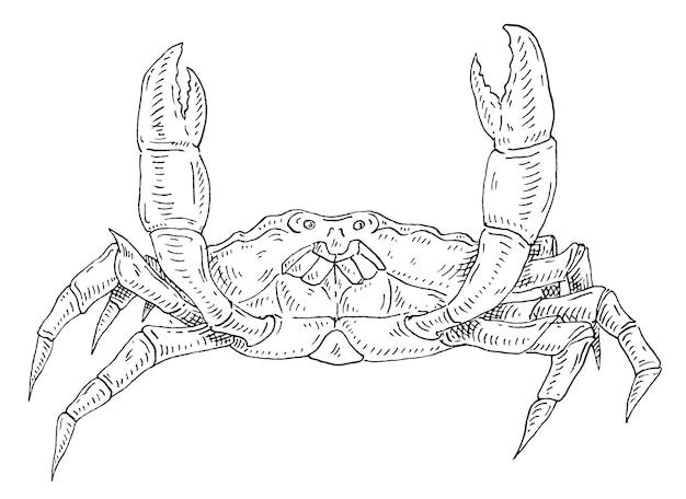 Krab na białym tle vintage wylęgowych wektor monochromatyczna czarna ilustracja