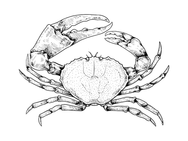 Krab wektor