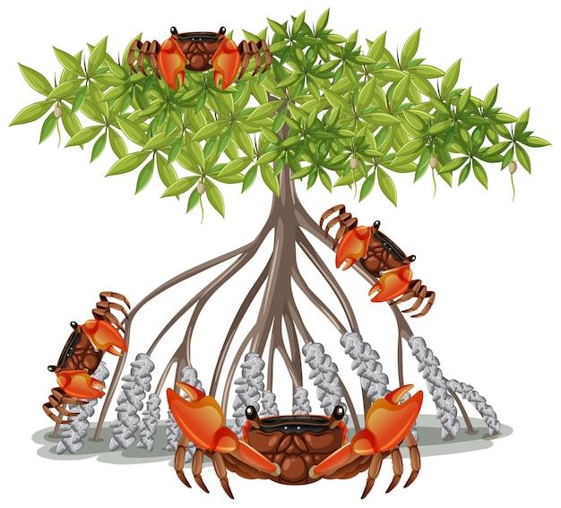 Krab z korzenia namorzynowego z drzewem namorzynowym w stylu kreskówka na białym tle