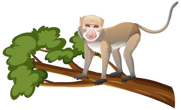 Krabożerny makak lub małpa na gałęzi drzewa w stylu kreskówki na białym tle