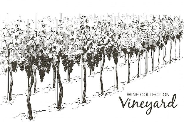 Krajobraz wzgórz winorośli. szkic ilustracji wektorowych linii