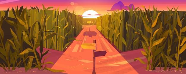 Krajobraz zachód słońca na polu kukurydzy z drewnianymi wskazówkami drogowymi i wysokimi zielonymi roślinami