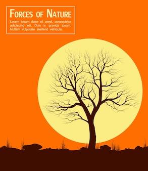 Krajobraz ze starym drzewem o zachodzie słońca. ilustracja wektorowa.