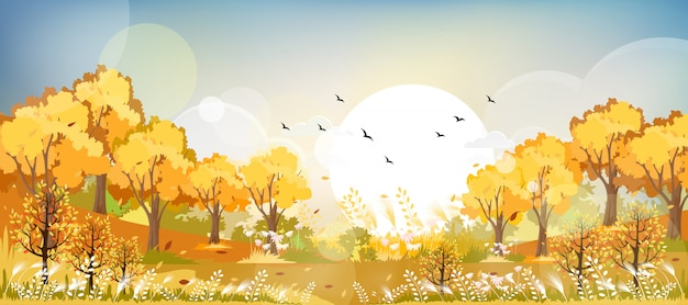 Krajobrazowy jesieni pole w żółtym i pomarańczowym ulistnieniu.