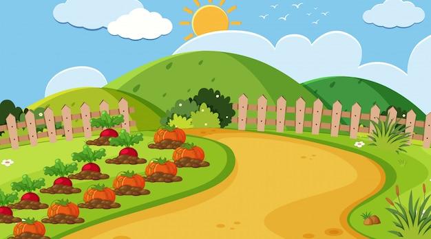 Krajobrazowy tło jarzynowy ogród