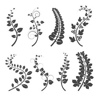 Kręcone gałęzie z sylwetkami liści na białym tle. gałąź roślin z liśćmi. ilustracja