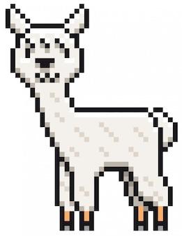 Kreskówka alpaki