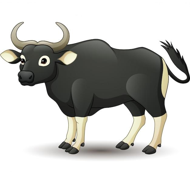 Kreskówka dzikie bydło banteng