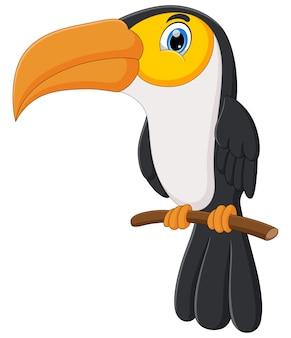 Kreskówka ładny ptak tukan