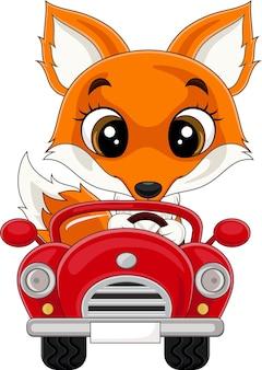 Kreskówka lisa jeżdżącego czerwonym samochodem