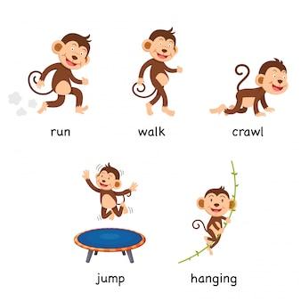 Kreskówka małpa słownictwo wektor ilustracja