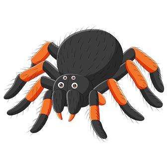 Kreskówka pająk tarantula na białym tle