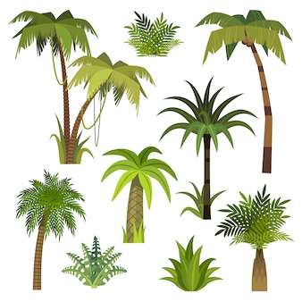 Kreskówka palmy. dżungla palmy z zielonymi liśćmi, egzotyczny las hawajski, palmy kokosowe na plaży miami zieleni na białym tle wektor zestaw