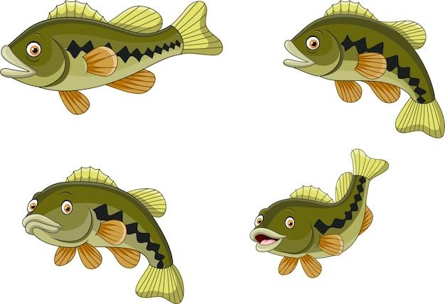 Kreskówka śmieszna bas ryba kolekcja odizolowywająca