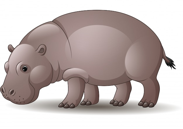 Kreskówka śmieszny hipopotam odizolowywający na białym tle