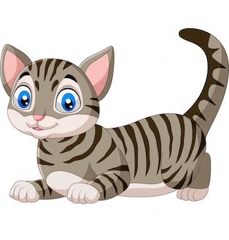 Kreskówka śmieszny kot odizolowywający na bielu