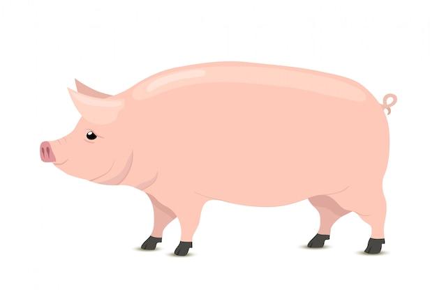 Kreskówka świnia, zwierzę rzeźnicze, sklep mięsny