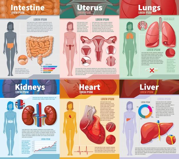 Kreskówka szablon infografika ludzkich narządów wewnętrznych