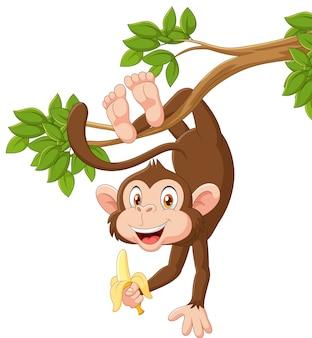 Kreskówka szczęśliwy małpi obwieszenie i mienie banan