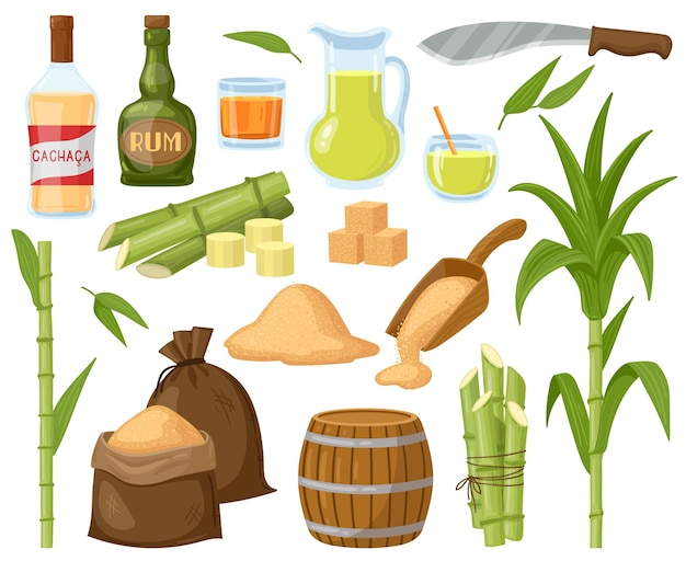 Kreskówka trzciny cukrowej. rośliny z liści trzciny cukrowej, kostki cukru, cukier granulowany i płyn alkoholowy rumowy