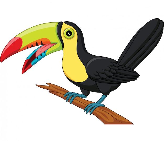 Kreskówka tukan ptak na białym tle