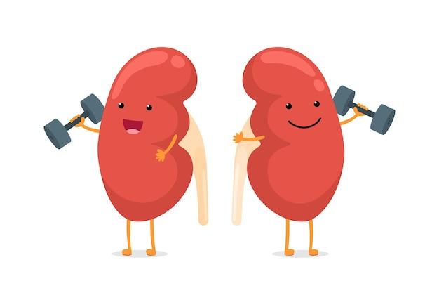 Kreskówka uśmiechający się zdrowy charakter nerek z hantlami. anatomia człowieka układ moczowo-płciowy narząd wewnętrzny udzielający porad, aby zachować aktywność i uprawiać sportową ilustrację wektorową