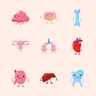 Kreskówka zestaw narządów