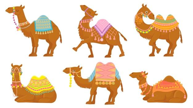 Kreskówka zestaw wielbłądów. śmieszne zwierzęta pustynne z siodłem
