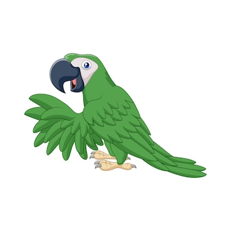 Kreskówka zielona papuga