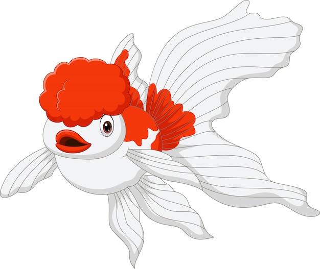 Kreskówka złota rybka oranda na białym
