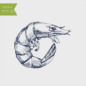 Krewetki morskie caridea grawerowanie ilustracja zwierząt