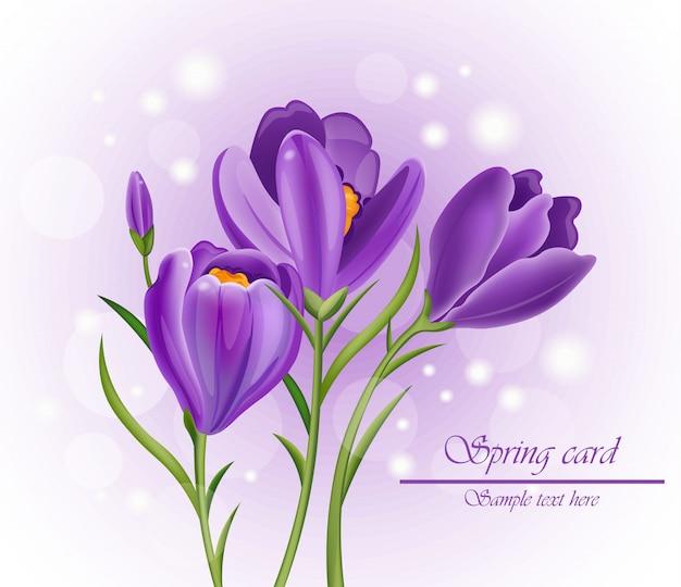 Krokusowy bukiet kwiatów w kolorze fioletowym