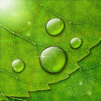 Krople wody na zielonym tle makro liści