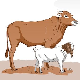 Krowa i koza