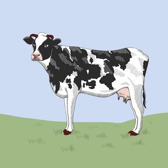 Krowa stoi na trawie.