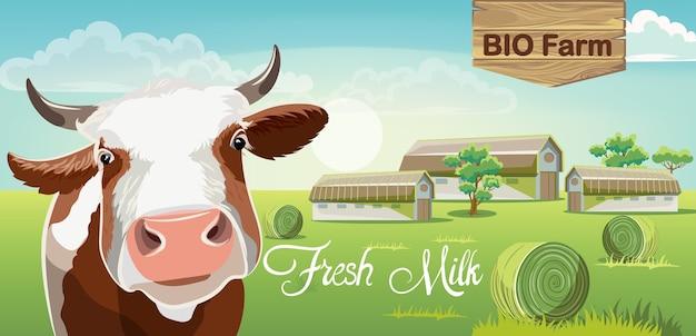 Krowa z brązowymi plamami i farmą w tle. świeże mleko bio.