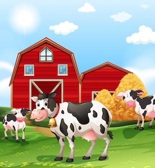 Krowy na polach uprawnych