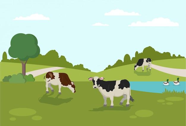Krowy pasące się na brzegu kaczki pływają w river animal farm