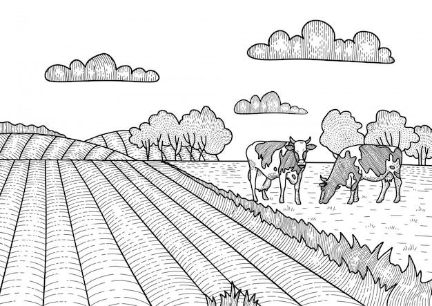 Krowy pasące się na łące. wieś, zagroda krajobrazowa. ręcznie rysowane liniowy szkic ilustracji.