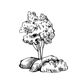Krzew na białym tle. afrykańska roślina retro sylwetka. vintage sawanny w grawerowaniu.