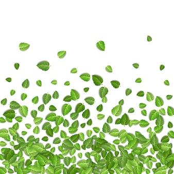 Kształt liści zielonej herbaty na białym tle