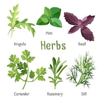 Kuchnia aromatyczna kolekcja ziół i przypraw w stylu cartoon. ilustracja gałęzi i liści rukoli, świeżej mięty, fioletowej bazylii, organicznej kolendry, aromatycznego rozmarynu i zielonego kopru.