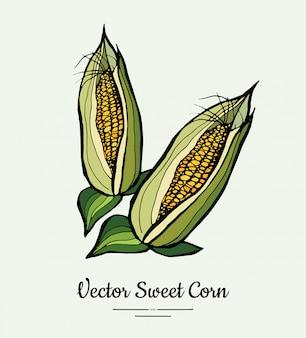 Kukurydza cukrowa, kolby kukurydzy, izolowane artykuły spożywcze kukurydzy. ręcznie rysowane ilustracja linia świeżej żywności.