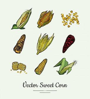Kukurydza cukrowa, kolby kukurydzy, zestaw spożywczy kukurydzy na białym tle. ręcznie rysowane ilustracja linia świeżej żywności.