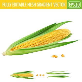 Kukurydzana ilustracja na bielu
