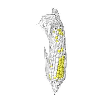 Kukurydzana ręka rysuje rocznika rytownictwa ilustrację