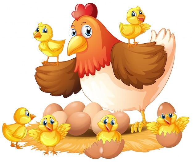 Kura i pisklęta na gnieździe