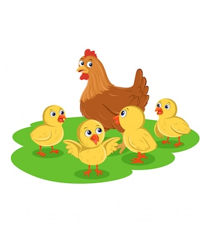 Kura i pisklęta